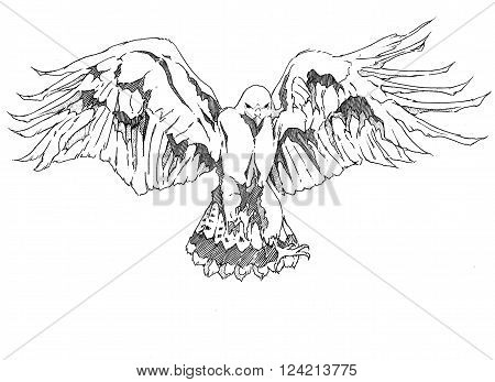 Black and white drawing of a hawk