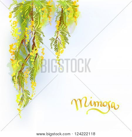 Yellow mimosa or acacia spring flowers verical garland on white blue background. Hand drawn floral yellow green border gesign and mimosa text. Sunny watercolor sketch background. Vector illustration.