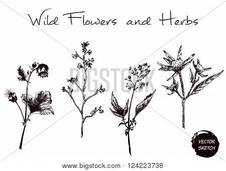 Vector Illustration of Scetch Herb and Wild Flowers for Design, Website, Background, Banner. Hand Drawn Element Template