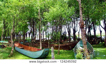It is taken in Dali, YunNan, China. There are many plants grow along the well-known ErHai (means ocean). Many abandoned boats are found in the woods.