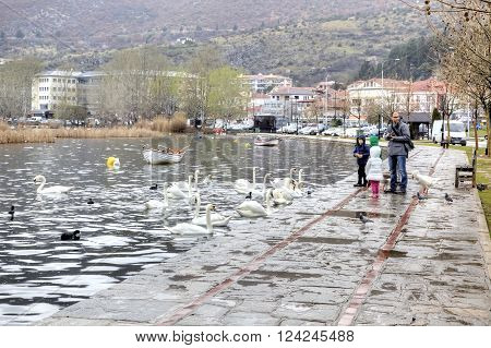 KASTORIA GREECE - March 12.2016: Townspeople feed the swans on the shore of Lake Orestiada