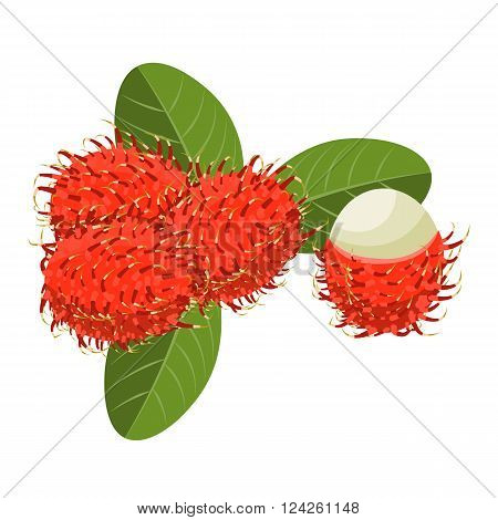 Rambutan Isolated vector illustration. Composition of Rambutan on white background. Natural food.