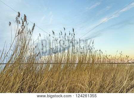 Backwater Landscape At The Island Of Usedom