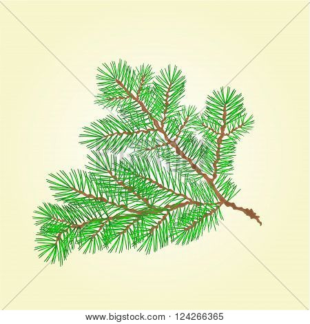 Spruce branch lush conifer isolated vector illustration