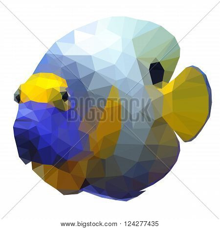 Polygonal illustration of a tropical angelfish. Silhouette of a fish, triangle low polygon style. Beautiful geometrical illustration of colorful blue and yellow angel fish isolated on white background
