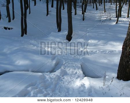 Winter path in a forest among trees