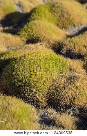 Mounds of green Korean grass in a zen garden.