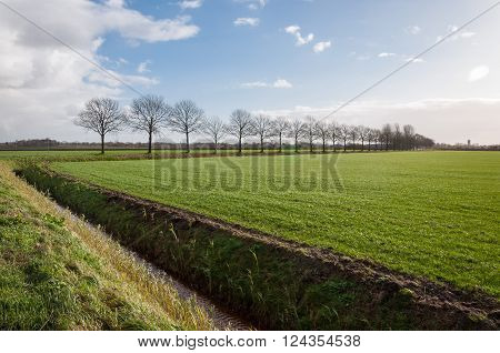 Landscape with green newly sown grass a ditch and a row of bare trees. It is a sunny day at the beginning of the winter season.