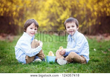 Little chick in child hands, cute little boy, holding cute 3 days old yellow chick, his brother watching him and enjoying the chicks