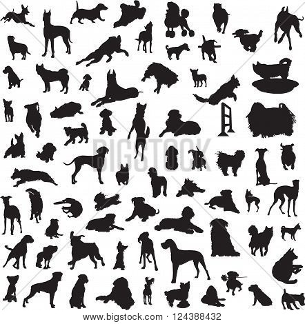 set of silhouettes of different breeds of dogs and for the different classes