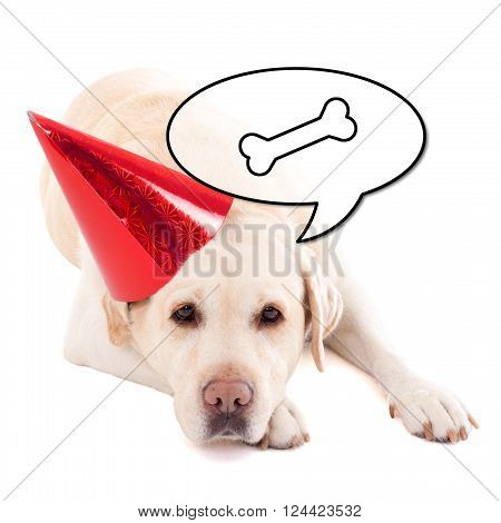 Sad Dog (golden Retriever) In Birthday Hat Thinking About Food Isolated On White
