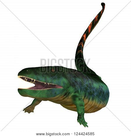 Eogyrinus Tetrapod Head 3D illustration - Eogyrinus was an aquatic predatory tetrapod that lived in the Carboniferous Period of England.