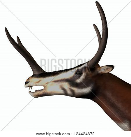Kyptoceras Mammal Head 3D illustration - Kyptoceras was a antelope type mammal that lived in North America during the Miocene to Pliocene Periods.