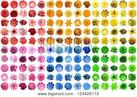 Mega Pack Of 150 In 1 Natural And Surreal Blue, Yellow, Red, Pink, Green And Orange Flowers Isolated