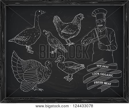 Beautiful Hen Quail Turkey Duck Goose With Chef