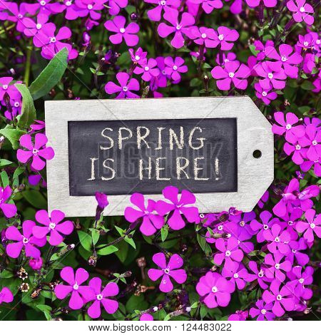 closeup of a label-shaped chalkboard with the text spring is here placed between many pink wildflowers
