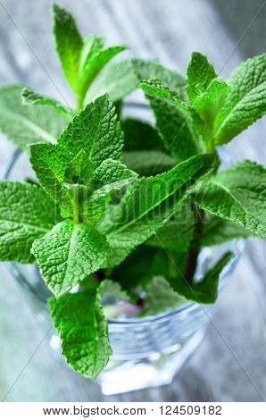 Close up of fresh organic mint over wooden background selective focus