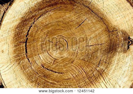 Pile old wood