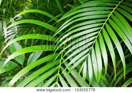 Bright Green Palm Tree Leaves, Tropical Nature