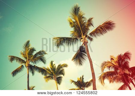 Coconut Palm Trees Over Bright Sky Background