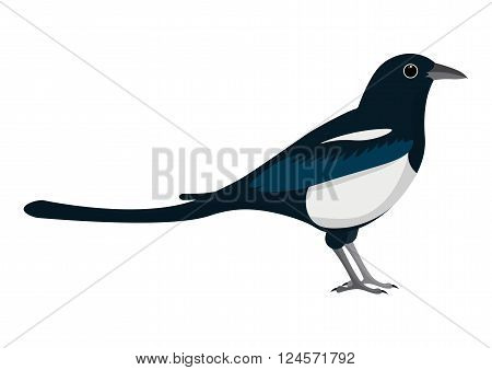 magpie cartoon vector illustration. magpie isolated on white bacground