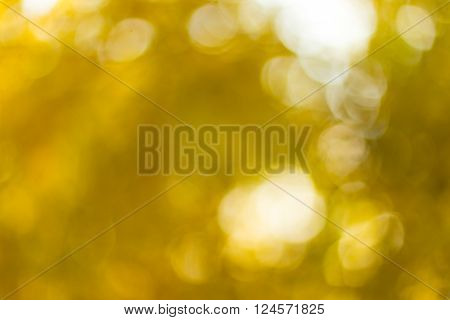 Autumn blurred background at day abstract light