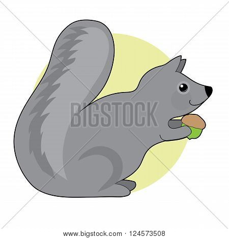 A little grey squirrel with a big fluffy tail is eating an acorn