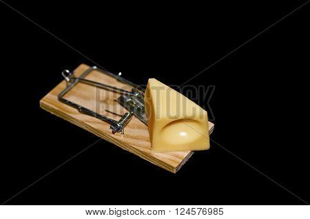 Cheese on mouse trap