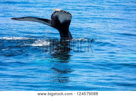 Whale Tail , Cape Cod