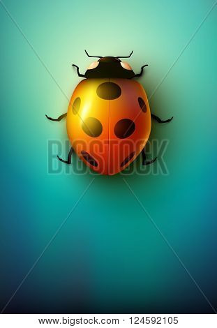vector ladybug illustration