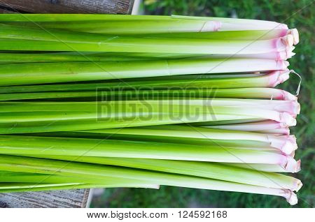 Abstract Backgrounf leaf and foliage Acorus calamus ** Note: Soft Focus at 100%, best at smaller sizes
