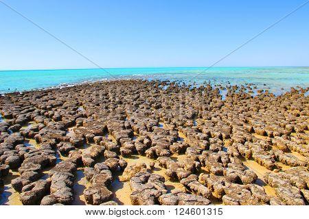 Stromatolites - Shark Bay World Heritage Area
