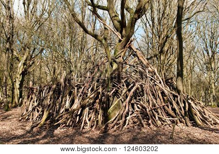 Large stick den built around a tree in the forest