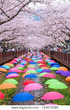 JINHAEKOREA - APRIL 4 : Jinhae Gunhangje Festival is the largest cherry blossom festival in Korea.Tourists taking photos of the beautiful scenery around JinhaeKorea on April 4, 2015. ** Note: Soft Focus at 100%, best at smaller sizes
