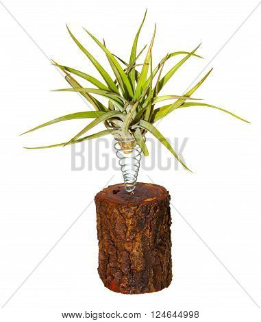 Strange decorative houseplant growing elevated above a log