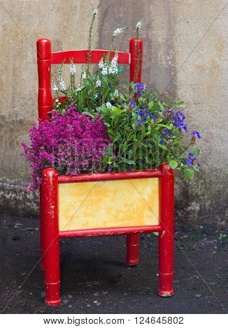 Decorative painted chair planted with various flowers as an eyecatcher for the home or garden.