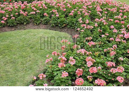 landscape of floral gardening with pathway and bridge in garden ** Note: Soft Focus at 100%, best at smaller sizes