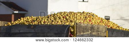 Picture of a Industrial apples in a truck
