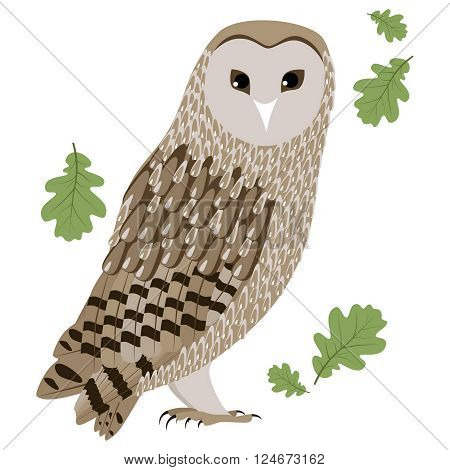 Vector Illustration of Barn Owl. Barn Owl isolated on white background. Vector illustration Barn Owl.