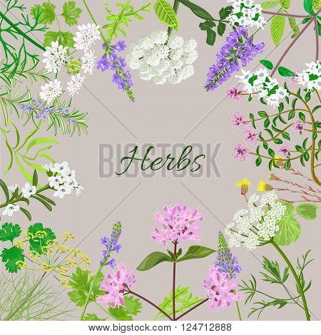 Flowering sage. Sage herb. Purple flowers. Vector illustration eps10