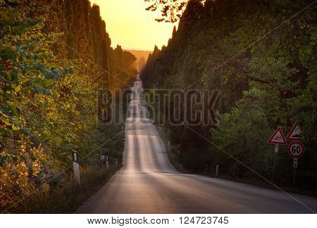 Italy, Tuscany, Castagneto Carducci, Bolgheri, Road And Cypresses