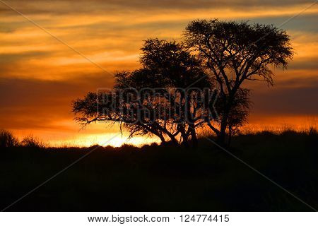Sunset in Namibia desert south west Africa