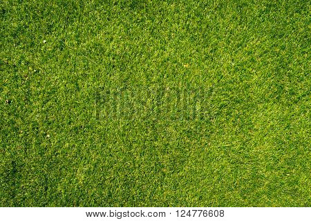 Natural grass texture patterned background in golf course turf from top view: Abstract background of authentic grassy lawn environmental textured pattern backdrop in bright yellow green color tone
