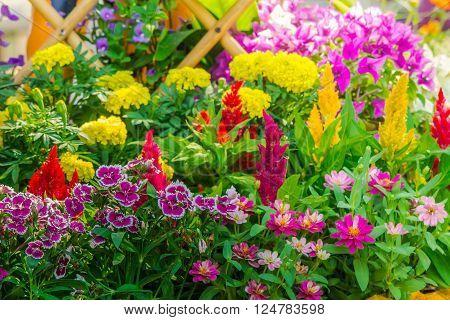 Beautiful Flower Garden On Summer.