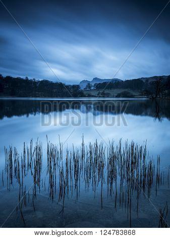 Loughrigg Tarn Reeds