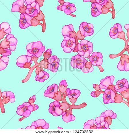 Pink bergenia crassifolia blossom seamless pattern. Vector hand-drawn illustration