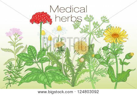 Template label, poster, page spread, design texts about alternative medicine. Vector illustration of flowers and medical herbs. Ginseng, chamomile, dandelion, arnica, yarrow, rosemary, caraway.
