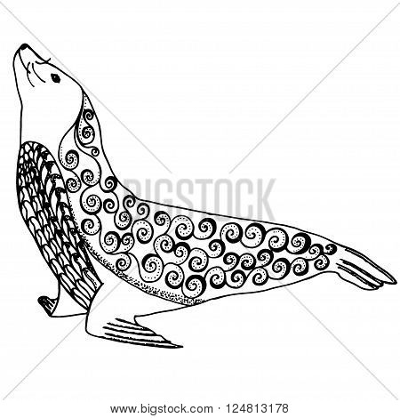 Sea lion zentangle stylized, seal vector illustration with freehand pencil, hand drawn pattern isolated on white background