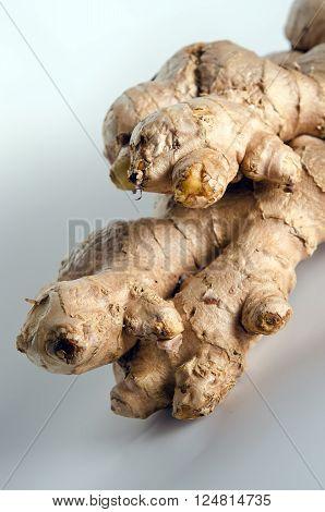 Ginger (Other names are Zingiber officinale Zingiberaceae Curcuma longa Elettaria cardamomum galangal) isolated on white background