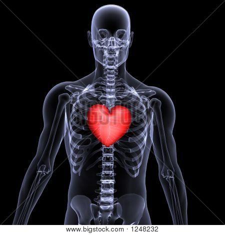 Skeleton X-Ray Valentine Heart 2